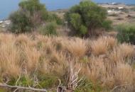 Terreno Edificabile Residenziale in Vendita a Pantelleria
