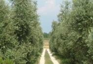 Terreno Edificabile Residenziale in Vendita a Polpenazze del Garda
