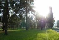 Terreno Edificabile Residenziale in Vendita a Tregnago