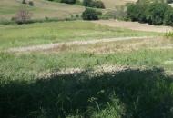 Terreno Edificabile Residenziale in Vendita a San Costanzo