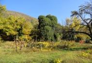 Terreno Edificabile Residenziale in Vendita a Cinto Euganeo