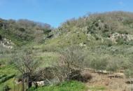 Terreno Edificabile Residenziale in Vendita a Altofonte