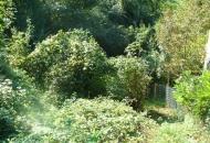 Terreno Edificabile Residenziale in Vendita a Cazzano di Tramigna