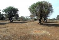 Terreno Edificabile Residenziale in Vendita a Racale