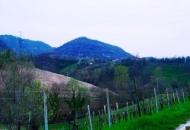 Terreno Edificabile Residenziale in Vendita a Monfumo