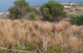 Terreno Edificabile Residenziale in vendita a Pantelleria, 9999 locali, prezzo € 35.000   CambioCasa.it