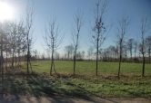 Terreno Edificabile Residenziale in vendita a Villa del Conte, 9999 locali, zona Località: Villa del Conte, prezzo € 145.000 | CambioCasa.it