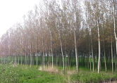 Terreno Edificabile Residenziale in vendita a Badia Polesine, 9999 locali, zona Località: Badia Polesine, prezzo € 250.000 | CambioCasa.it