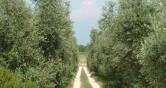 Terreno Edificabile Residenziale in vendita a Polpenazze del Garda, 9999 locali, Trattative riservate | Cambio Casa.it