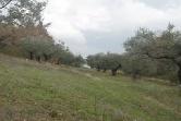 Terreno Edificabile Residenziale in vendita a Mondaino, 9999 locali, zona Località: Mondaino, prezzo € 220.000 | Cambio Casa.it