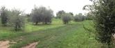 Terreno Edificabile Residenziale in vendita a Bedizzole, 9999 locali, zona Località: Bedizzole, prezzo € 140.000 | Cambio Casa.it
