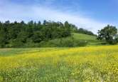 Terreno Edificabile Residenziale in vendita a Montelabbate, 9999 locali, zona Località: Montelabbate, prezzo € 390.000 | Cambio Casa.it