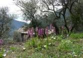 Terreno Edificabile Residenziale in vendita a Badalucco, 9999 locali, zona Località: Badalucco, prezzo € 55.000 | Cambio Casa.it