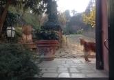 Villa in vendita a Montegrotto Terme, 6 locali, zona Località: Montegrotto Terme, prezzo € 550.000 | Cambio Casa.it