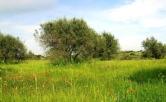 Terreno Edificabile Residenziale in vendita a Quarto d'Altino, 9999 locali, prezzo € 29.000 | Cambio Casa.it