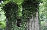 Terreno Edificabile Residenziale in vendita a Tavernerio, 9999 locali, prezzo € 120.000 | Cambio Casa.it