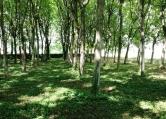 Terreno Edificabile Residenziale in vendita a Monselice, 9999 locali, zona Località: Monselice, prezzo € 250.000 | Cambio Casa.it