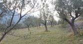 Terreno Edificabile Residenziale in vendita a Pescosolido, 9999 locali, prezzo € 12.000 | CambioCasa.it