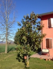 Villa Bifamiliare in vendita a Tribano, 4 locali, zona Località: Tribano, prezzo € 180.000 | CambioCasa.it